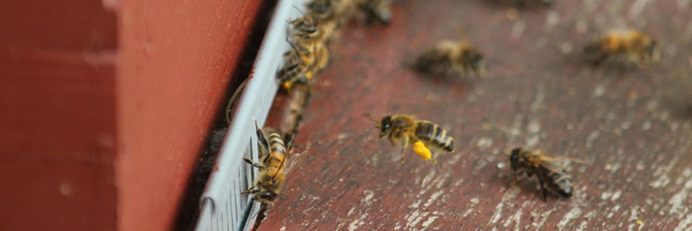 Longchamps Bijen Abeilles 3