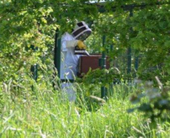 Bijen Longchamps